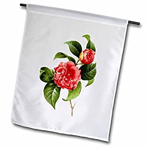 3dRose fl_106754_1 Redoute Vintage Watercolor Floral Common Camellia Camellia Japonica Garden Flag, 12 by 18-Inch