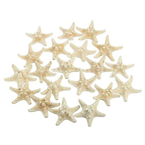 SODIAL(R) 20pcs White Bleached Knobby Starfish Wedding Display Seashell Craft Decor