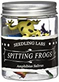 Amazing Spitting Frogs