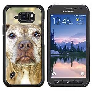 TECHCASE---Cubierta de la caja de protección para la piel dura ** Samsung Galaxy S6 Active G890A ** --American Pit Bull Terrier Dog canina