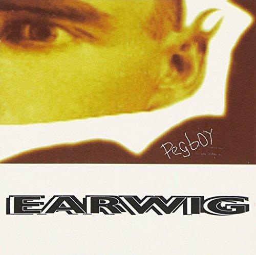 Earwigs - 7