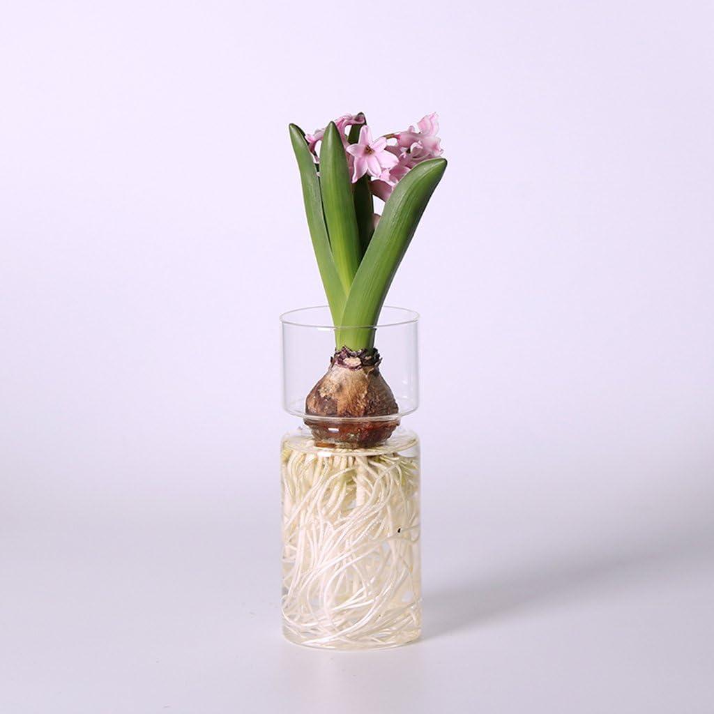 Transparente Glas Hyazinthenvase Hyazinthenglas Glasvase Dekovase Blumenvase