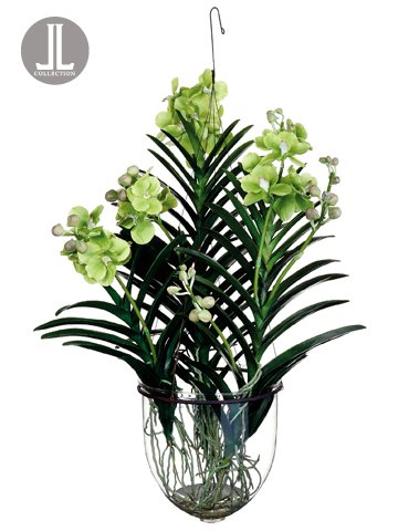Amazon 32 Vanda Orchid Hanging Plant In Glass Vase Green Pack