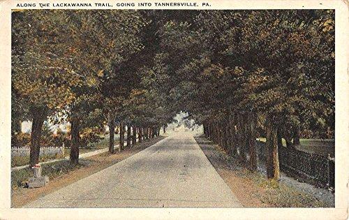 Tannersville Pennsylvania Lackawanna Trail Street View Antique Postcard - Pennsylvania Tannersville