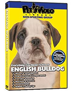 English Bulldog DVD: Everything You Should Know + Dog & Puppy Training Bonus