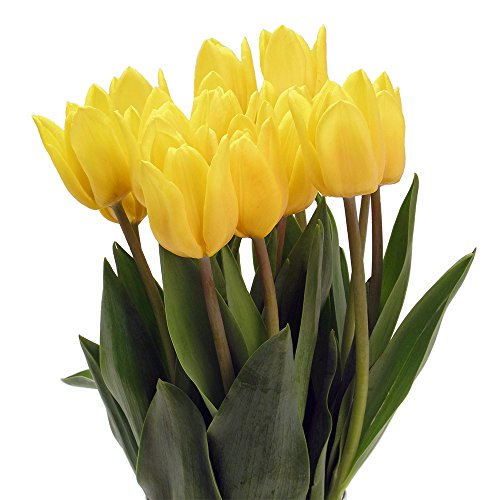Stargazer Barn - Mellow Yellow Tulips with Unique Hobnail Style Glass Vase - Yellow Tulips - Cozy & Cheery Flowers - Holiday Décor - Sustainably Grown - Yellow Flowers - Thanksgiving Décor