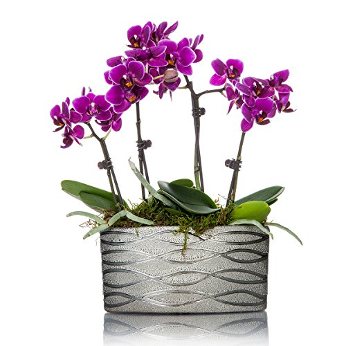 Just Add Ice Mini Orchid Planter in Silver Ceramic (Just Add Ice)