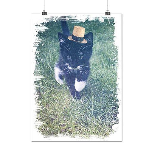 Curious Kitty Walk Fancy Hat Matte/Glossy Poster A2 (17x24 inches) | Wellcoda (Fancy Clownfish)