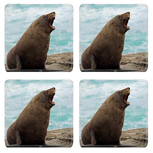 New Zealand Fur Seal - 2