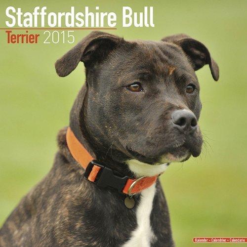 - By MegaCalendars Staffordshire Bull Terrier Calendar - Just Staffordshire Bull Terrier Calendar - 2015 Wall calendars [Calendar]