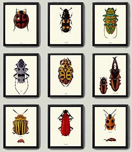 (Beetle Print SET of 9 Art Print Antique Beetles Red Ladybug Green yellow Polka Dot Stripe Insect Natural Science Illustration Garden Forest Nature Home Decor Interior Design to Frame)