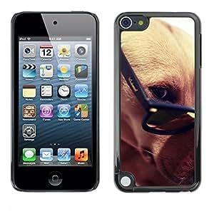 Be Good Phone Accessory // Dura Cáscara cubierta Protectora Caso Carcasa Funda de Protección para Apple iPod Touch 5 // Greyhound Glasses Smart Dog Brown