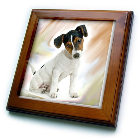 3dRose ft_4236_1 Jack Russell Terrier Framed Tile, 8 by 8-Inch