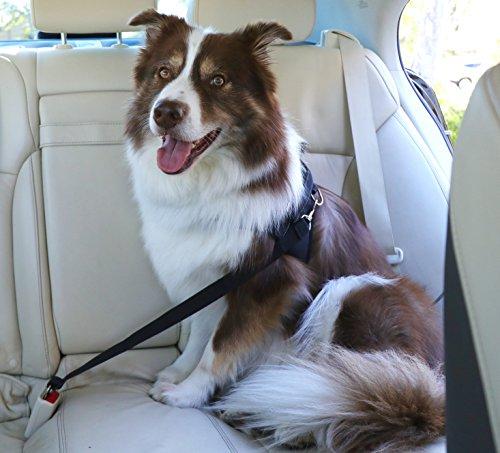 Dog-Harness-and-Leash-Set-StrawberryEC-MediumLarge-No-Pull-Dog-Harness-Adjustable-Soft-Padded-Vest-Harness-With-Handle-for-Walking-Training