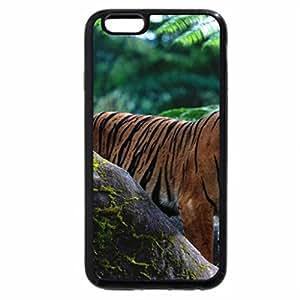 iPhone 6S / iPhone 6 Case (Black) Beautiful Sumatran tiger