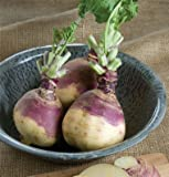 David's Garden Seeds Rutabaga American Purple Top D634 100 Open Pollinated Seeds