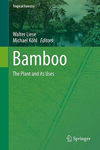 Bamboo Book - 8