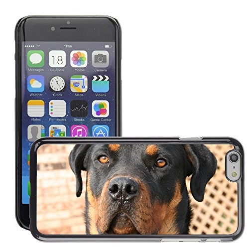 "Just Phone Cases Hard plastica indietro Case Custodie Cover pelle protettiva Per // M00128976 Hound Dog Pet Canine domestique Race // Apple iPhone 6 PLUS 5.5"""
