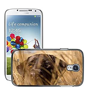 Hot Style Cell Phone PC Hard Case Cover // M00046950 dog animals pets // Samsung Galaxy S4 i9500
