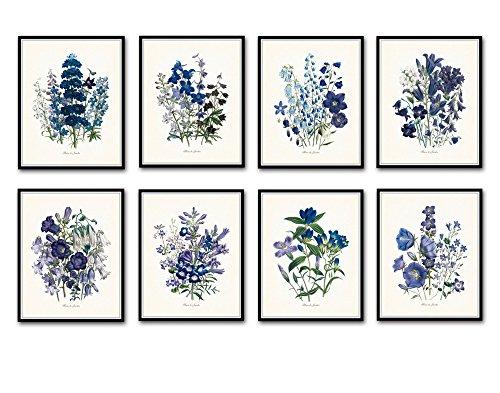 Fleurs de Jardin Botanical Prints No. 8 Set of 8 Giclee Fine Art Prints - Unframed