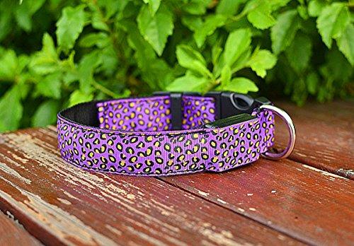 LED Halsband in verschiedenen Farben und Größen - Wasserdichte Halsbänder LED-Blinklicht-Band-Gurt für Haustiere Hunde und Katzen - Direktversand aus Deutschland von ETU24® (Lila, 50 Zentimeter)