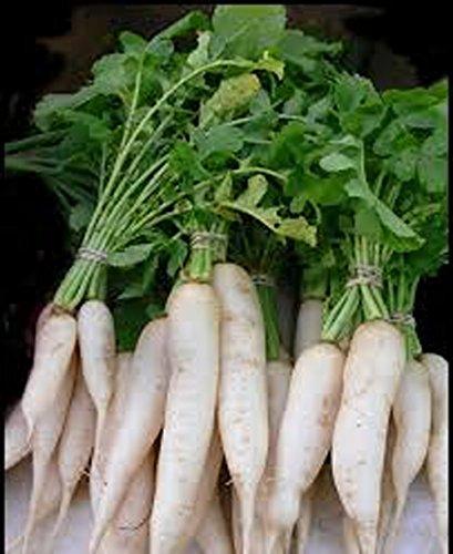 Radish. Japanese Minowase (Daikon) Radish Seed, Organic , NON-GMO, 50 seeds per package.