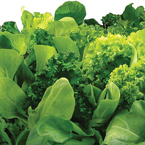 51npXRW1zIL - Miracle-Gro AeroGarden Heirloom Salad Greens Seed Pod Kit