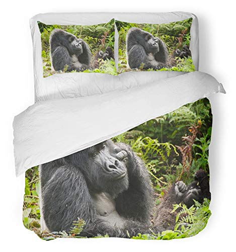 Emvency 3 Piece Duvet Cover Set Breathable Brushed Microfiber Fabric Silver Gorilla Male Silverback Sunbathing Rwanda Ape Endangered Highland Primate Bedding Set with 2 Pillow Covers Twin Size