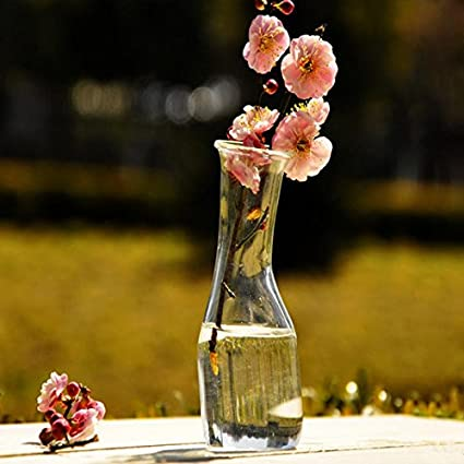 Inovey Flores Hidroponía Plantas Estantería Vidrio Botella Florero Casa Jardín Decoración De Fiesta De Boda