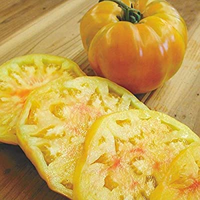 Gold Medal Tomato Seeds - good yields of 1 to 2 lb bi-colored orange-yellow !!!(10 - Seeds) : Garden & Outdoor