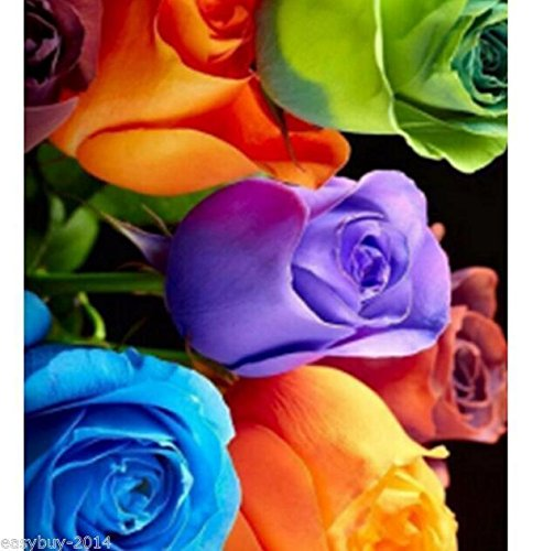 Colorful Roses Diamond Embroidery 5d Diamond DIY Painting Cross Stitch