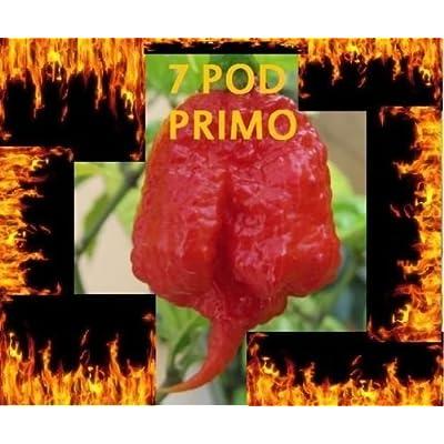 15 Seeds Trinidad 7 Pod (7 Pot) PRIMO Extremely Rare Hottest Pepper World Record : Garden & Outdoor