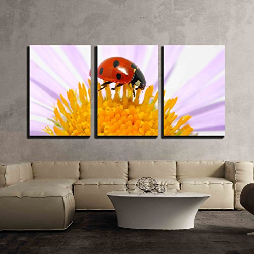 wall26 - 3 Piece Canvas Wall Art - Ladybug Sits on a Flower Petal - Modern Home Decor Stretched and Framed Ready to Hang - 24