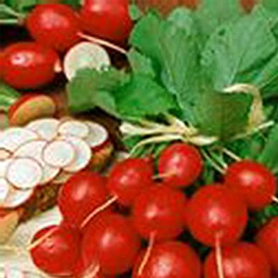 Organic Cherry Belle Radish Seeds - Heirloom Garden Seeds, Non-GMO, AAS Winner - Vegetable Gardening and Micro Greens