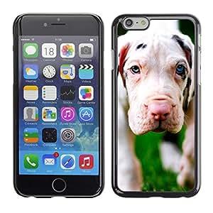 Vortex Accessory Carcasa Protectora Para APPLE iPHONE 6 PLUS ( 5.5 IN ) - Dog Puppy Great Dane Cute -