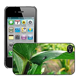 Super Stella Slim PC Hard Case Cover Skin Armor Shell Protection // M00106501 Green Plants Insects Flies Fly // Apple iPhone 4 4S 4G