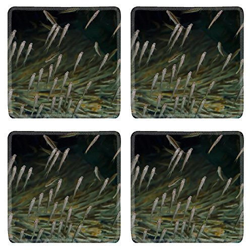 MSD Square Coasters Non-Slip Natural Rubber Desk Coasters design 20439007 aquarium fish spa in Thailand by MSD