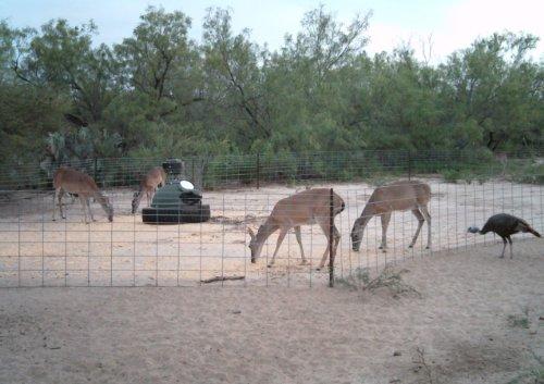 250 Lb Capsule Game Feeder - Feed Deer, Horses, Hogs, Sheep, and Goats by Capsule Game Feeders (Image #4)