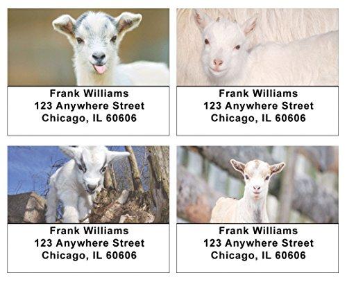 Kid Goats Address Labels