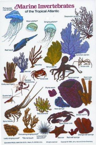 New Submersible Fish ID Card & Pocket Guide for Scuba Divers, Snorkelers & Fishermen - Marine Invertebrates of the Tropcial Atlantic/FBM
