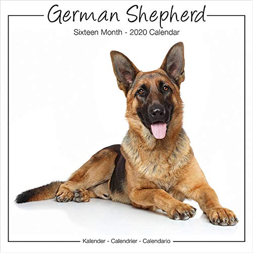 German Shepherd Calendar - Calendar German Shepherd - Dog Breed Calendars - Calendars 2019 - 2020 Wall Calendars - 16 Month Wall Calendar by Avonside Studio (Multilingual Edition)