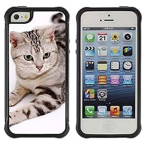 Suave TPU GEL Carcasa Funda Silicona Blando Estuche Caso de protección (para) Apple Iphone 5 / 5S / CECELL Phone case / / American Bobtail House Cat Stripes /