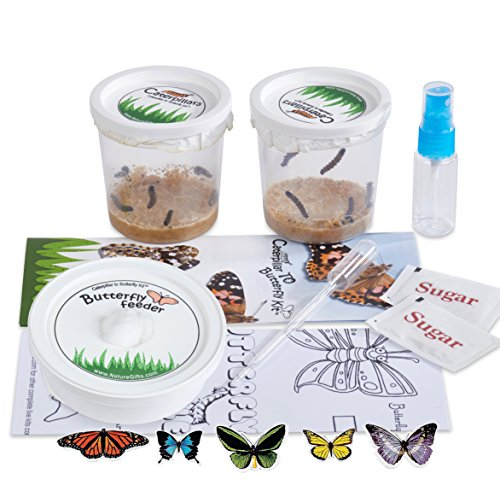 Nature Gift Store Live Butterfly Growing Kit: Shipped WITH 10 Live Caterpillars NOW, Pop-Up Cage, Book and Stickers BUNDLE by Nature Gift Store (Image #1)