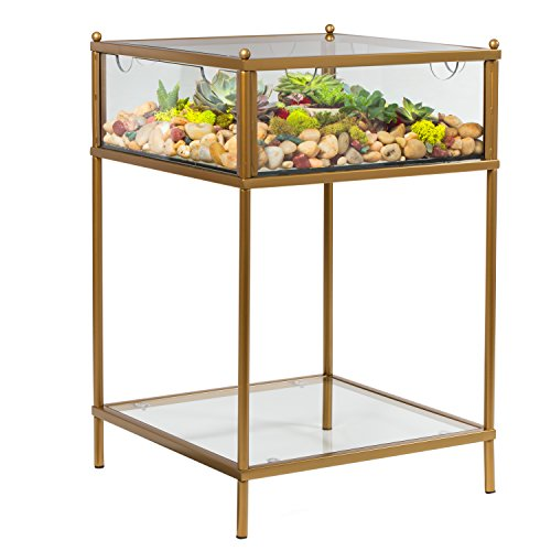 (Terrarium Display End Table with Reinforced Glass in Gold Iron)