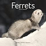 Ferret Calendar - Cute Animals Wall Calendar - Calendars 2018 - 2019 Wall Calendars - Ferrets 16 Month Wall Calendar by Avonside