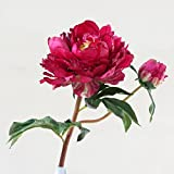 Emulation Blu Spa King peony flowers indoor living room corridors ornaments decorating the craft flower 50×15cm,1 branches deep in the red Peony