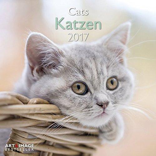Katzen 2017 - A&I Katzenkalender, Tierkalender, Broschürenkalender - 30 x 30 cm