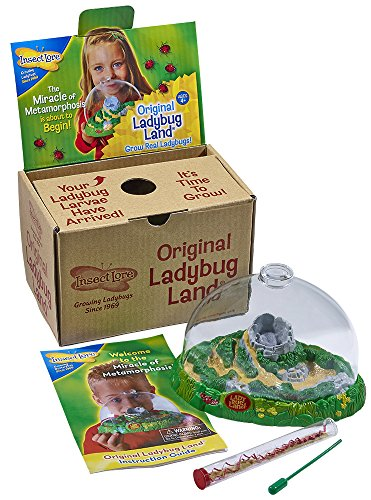 Insect Lore Live Ladybug Growing Kit Toy - Baby Ladybug Larvae to Adult Ladybugs -SHIP NOW