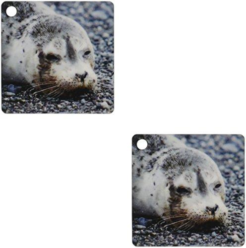 3dRose Washington, Pacific Harbor Seal Pup Key Chains, 2.25