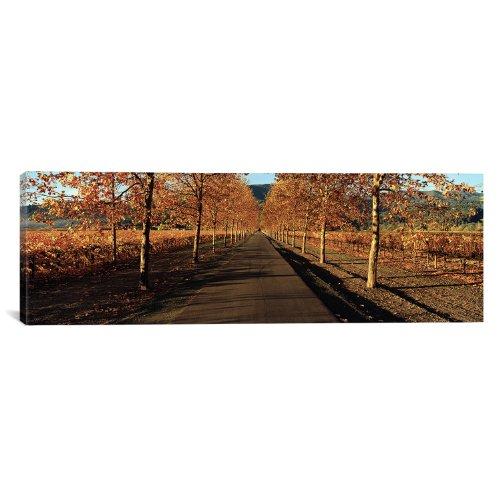 - iCanvasART Vineyards Along a Road, Beaulieu Vineyard, Napa Valley, California, USA by Panoramic Images Canvas Art Print, 60 by 20-Inch